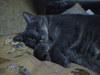 ぐっすり眠る猫ちゃん画像