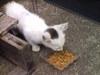 迷い子猫画像2