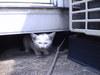 迷い子猫画像1