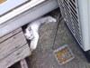 迷い子猫画像3