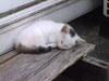 眠り子猫画像