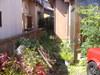 ヘッジトリマで庭を手入れ画像