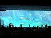 ちゅら海水族館画像2