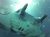 ちゅら海水族館画像3